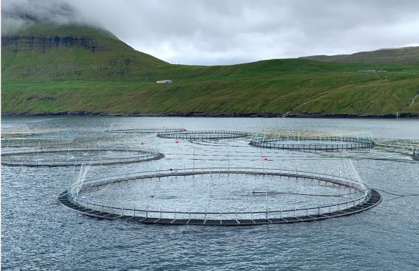 Fiskeopdræt, Akvakultur, Færøerne